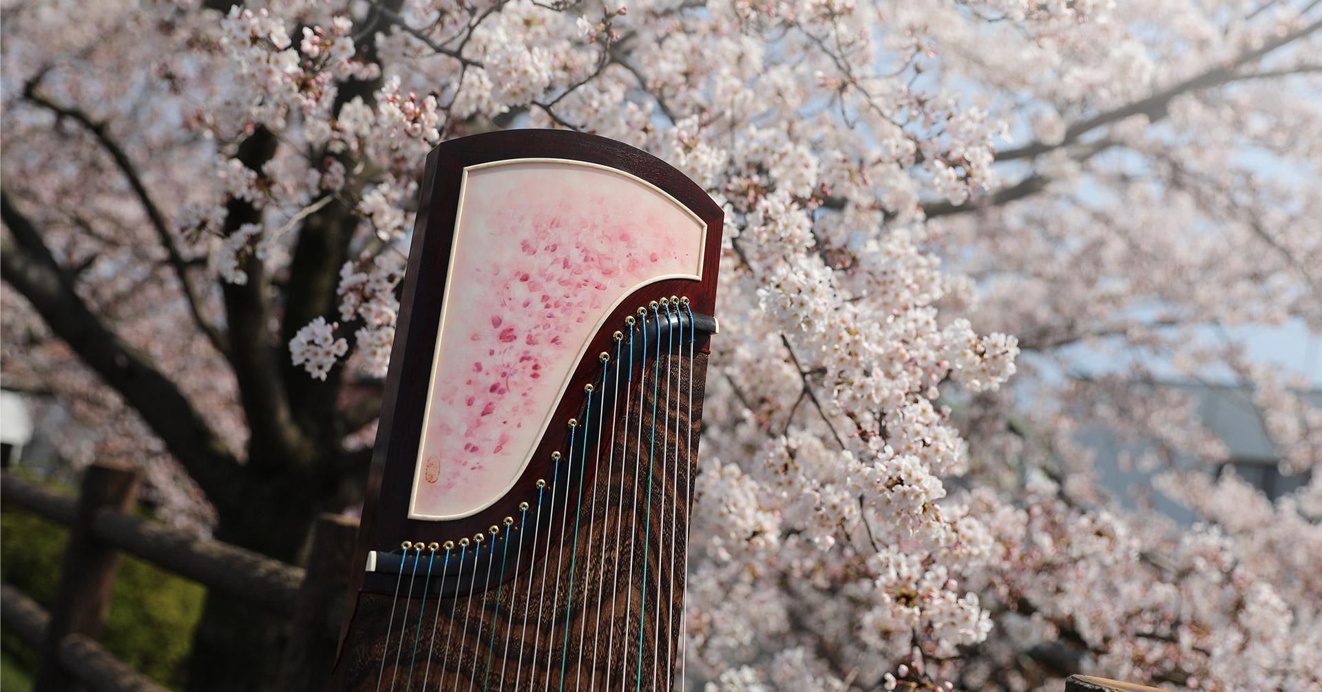 香港炫光古箏為你留住櫻花最美的一刻